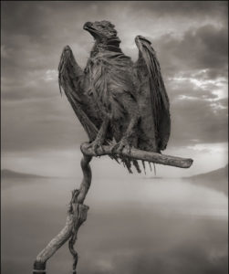 Calcified Eagle